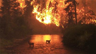 [Burning forest]. HUD Photo