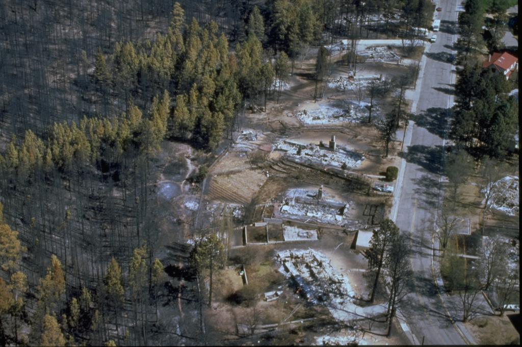 Burned forest and foundations of houses